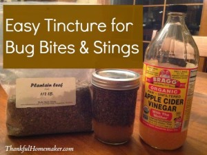Easy Tincture for Bug Bites & Bee Stings