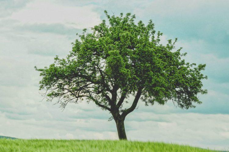 What is Spiritual Maturity?